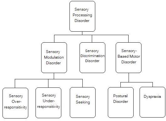 Diagram explaining different subtypes of sensory processing disorder